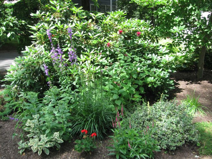 Best 25 no grass landscaping ideas on pinterest river for Natural landscaping ideas front yard