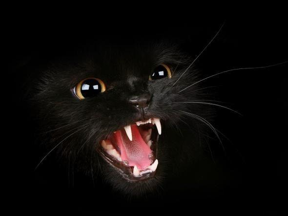 Происхождение самых популярных суеверий | Brain Berries http://www.via0.com/  relationships   https://brainberries.co/wp-content/uploads/2017/11/proishojdeniye-samyh-populyarnyh-suyeveriy-6.jpg  Суеверия имеют страшную власть над нами. Даже самые несуеверные люди иногда обходят черных кошек стороной и бояться посмотреть в разбитое зеркало. Здесь мы собрали самые популярные суеверия и выяснили их происхождение.      Берегитесь черных котов Испокон веков кошкам приписывают связь с…
