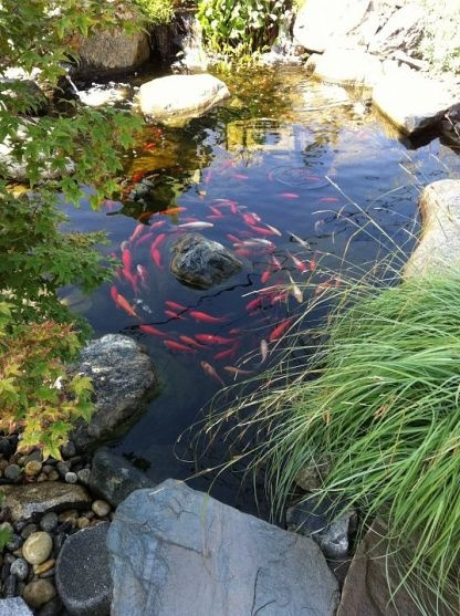 Bring your landscape to life with koi frozen paisajes y for Premade koi ponds
