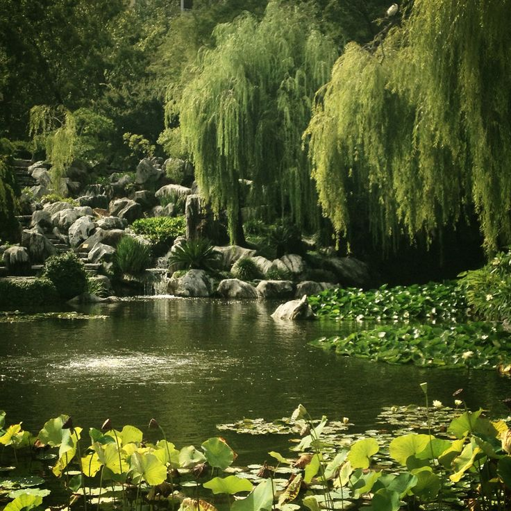 Chinese Gardens in Sydney.  Beautiful and so peaceful. Very glad I visited- highly recommend it.
