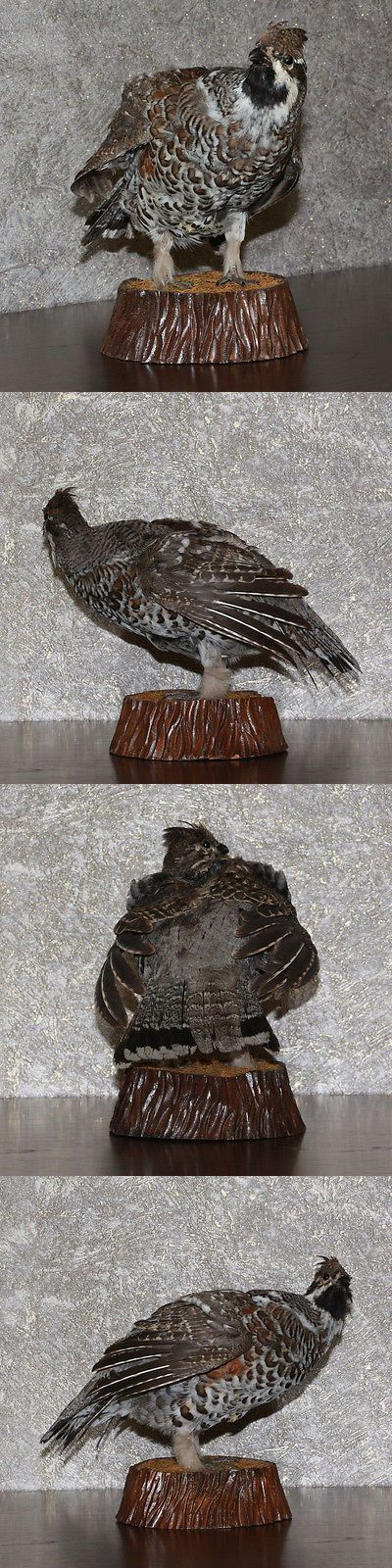 Birds 71123: Hazel Grouse - Taxidermy Bird Mount, Stuffed Bird For Sale - Hazel Hen BUY IT NOW ONLY: $79.0