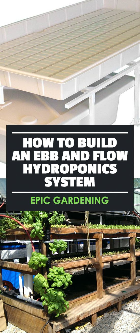 Learn how to build an ebb and flow hydroponics system, one of the simplest and cheapest ways to start growing plants in your own home.