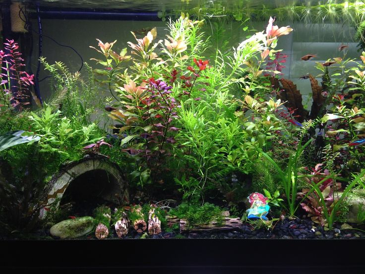 How to set up a low light low tech planted tank for Fish tank live plants