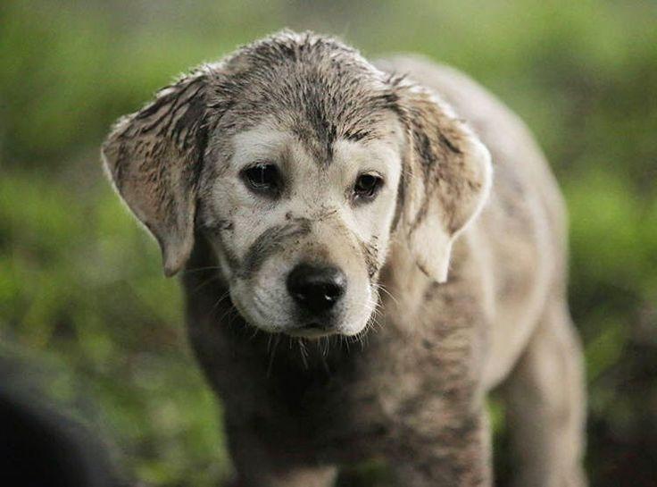 """VIDEO: Durante el pasado Super Bowl XLIX, Budweiser transmitió el comercial """"Lost Dog"""" para  promocionar su marca."""