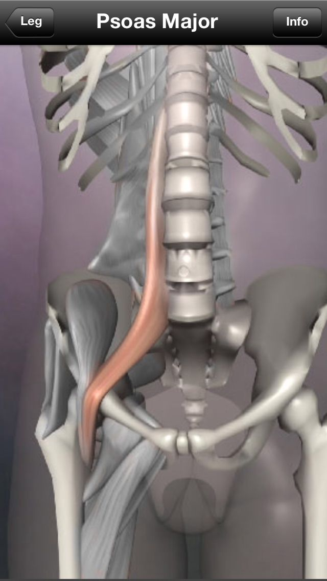 One of the most important muscles to release: psoas major and minor. It attached to your femur, lumbar vertebrae and your diaphragm. It gets tight: sitting regularly, sleeping in fetal position, forward moving exercise. #hip flexor #psoas