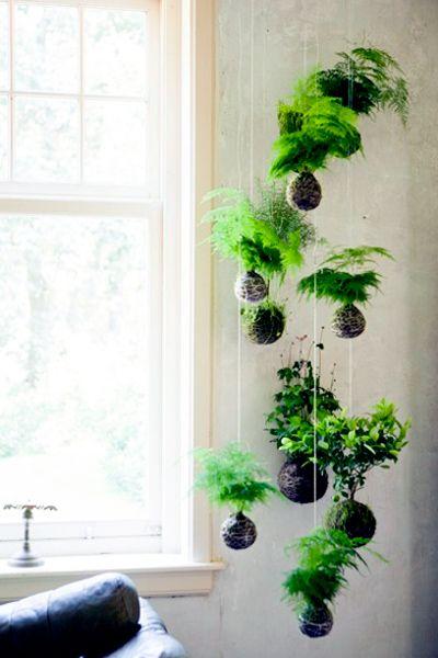 Växter inomhus, krukväxter, grönt