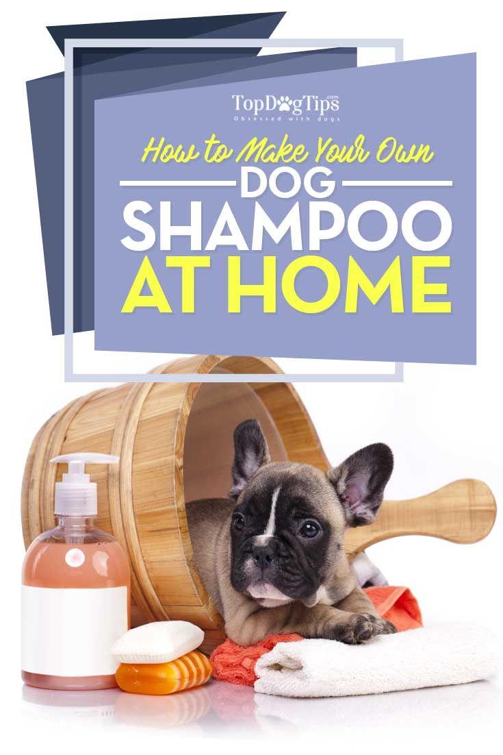 How to Make Homemade Flea Shampoo for Dogs - Top Dog Tips