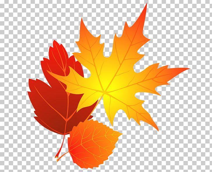 Autumn Leaf Color Maple Leaf Png Autumn Autumn Leaf Color Autumn Leaves Cliparts Blog Color Autumn Leaf Color Autumn Leaves Leaf Coloring
