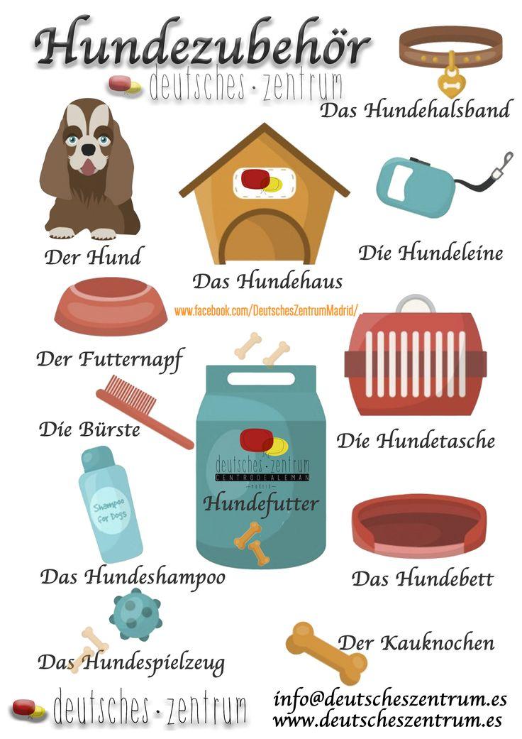 Hund Deutsch Wortschatz Grammatik Alemán German DAF Vocabulario