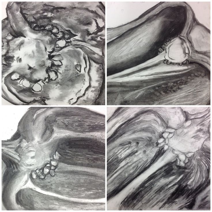 viewfinder studies of peppers using charcoal (induction project)