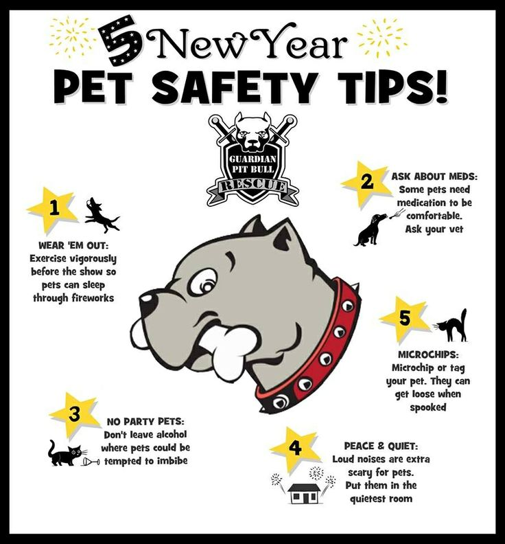 safety new years eve and pets on pinterest