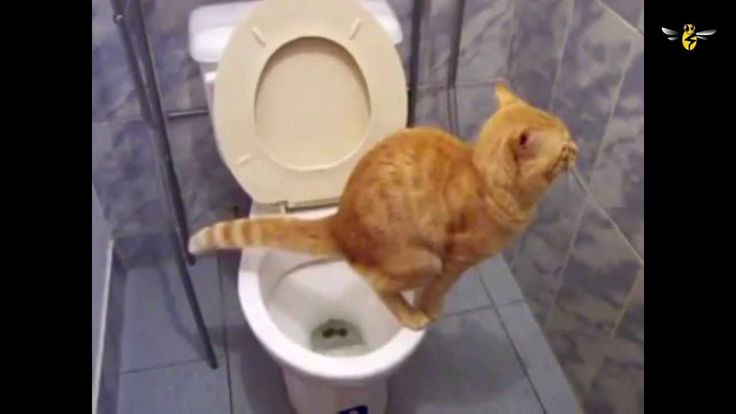 Sometimes pets are jerks but sometimes they can be polite... #funnyanimals #funnypets #funnycats #funnydogs #animalscanbepolite