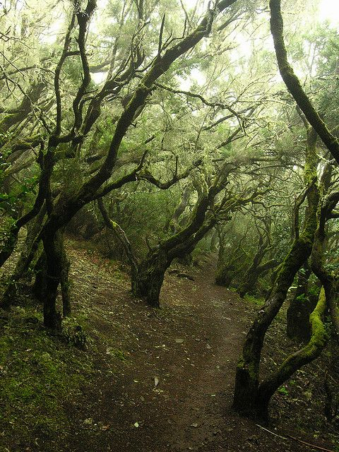 Garajonay National Park on the island of La Gomera. This is the biggest laurel wood in the world and a UNESCO World Heritage site. ( Canary Islands, Spain) by Megaptera86