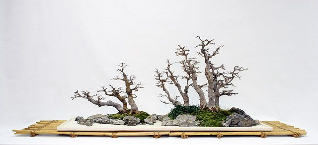 Bonsai forest pictures