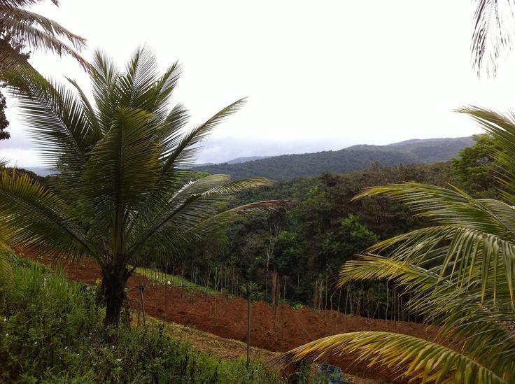En traversant Basse-Terre... #Guadeloupe #Antilles #France