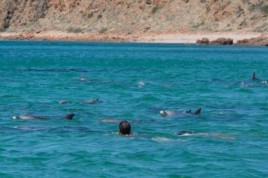 Swimming with the dolphins at bay of shaols