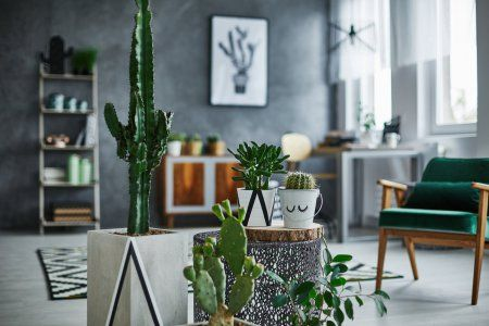 5 Super Low-Maintenance Indoor Succulents for Your Chill Room Goals #news #alternativenews