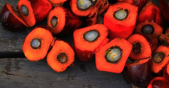Olio di palma: gli effetti sulla salute