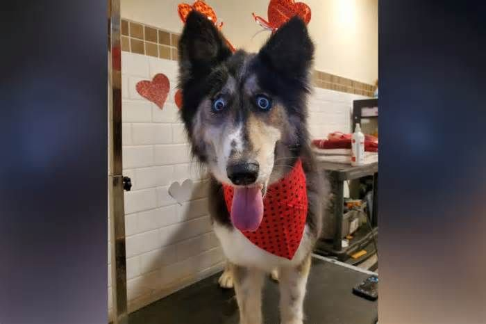 Jubilee The Nj Shelter Dog With Weird Eyes Adopted After Story