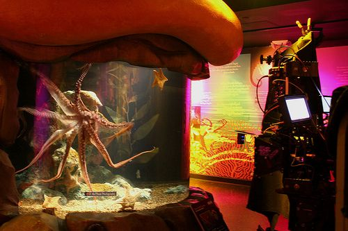 Here at the Octopus Garden in the SEA LIFE Minnesota Aquarium a crew came in to grab some 3D footage of our octopus! #sealifemn