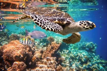 Snorkeling with Turtles in the Bay of Akumal