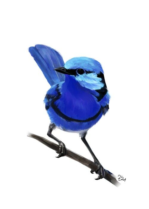 185 best blue wren inspired arts and crafts images on pinterest bird paintings paintings of. Black Bedroom Furniture Sets. Home Design Ideas