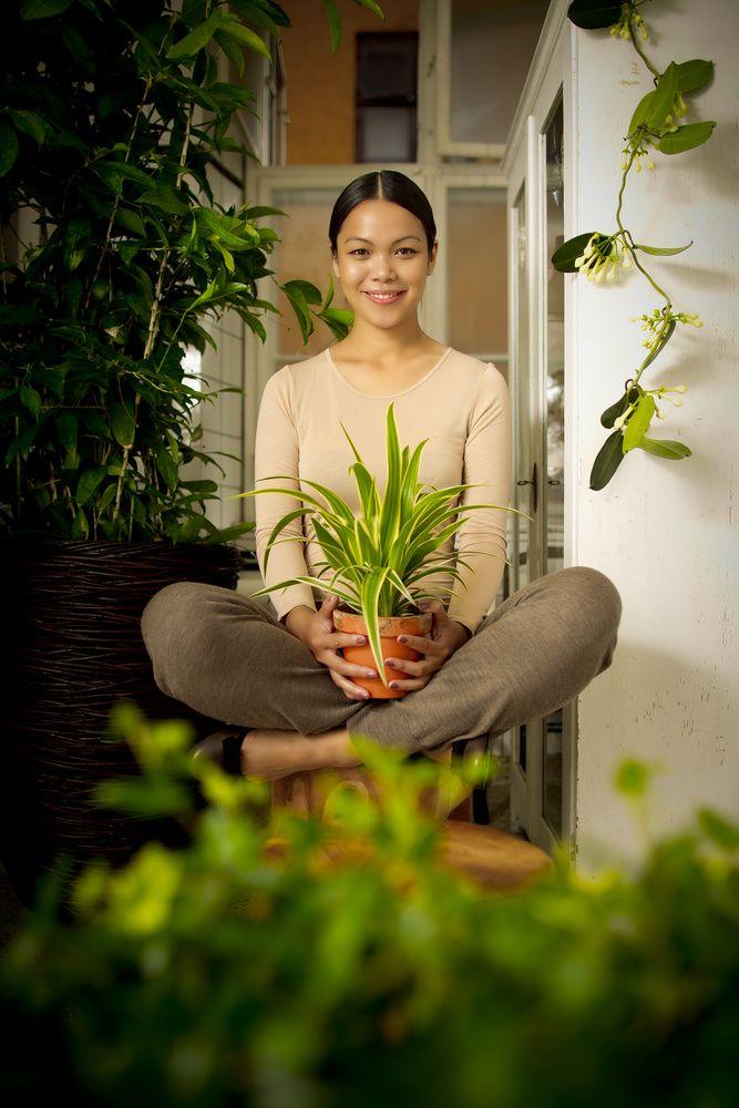 12 best plants zimmerpflanzen feng shui energie images on pinterest feng shui house. Black Bedroom Furniture Sets. Home Design Ideas