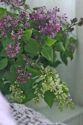 ... Lavender on Pinterest | Lavender, Lavender Cupcakes and Lavender