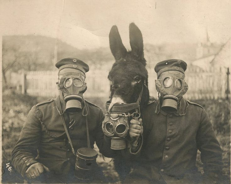 "WW1: Two German soldiers, wearing their gas masks, pose with their mule, which has been barely fitted with a personnel gas mask as well. The poor mule of course stood no chance of surviving a gas attack with such ""protection."" 1916."