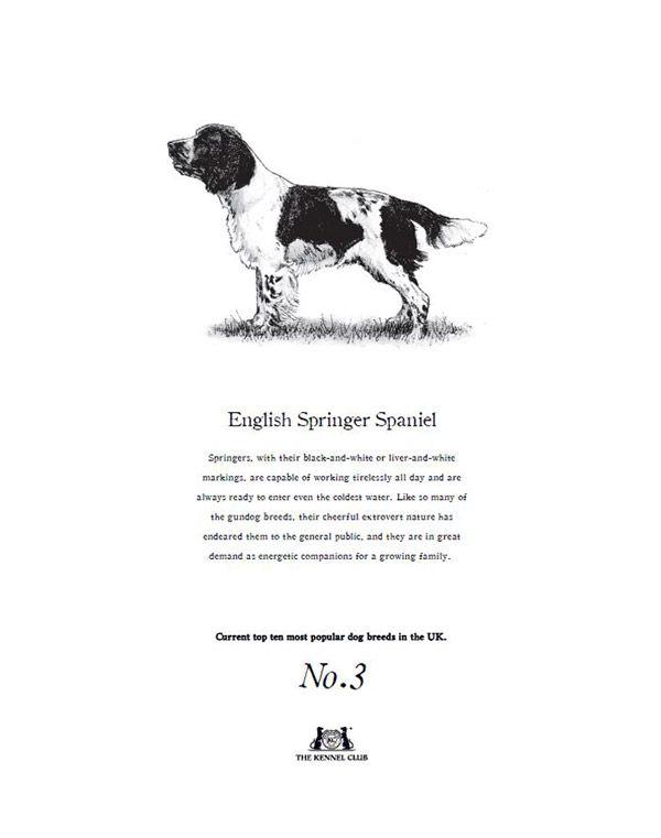 English Springer Spaniel Tea Towel The Kennel Club Official Shop