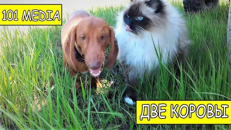 Русское видео про животных Приколы про собак новые видео смешное про соб...