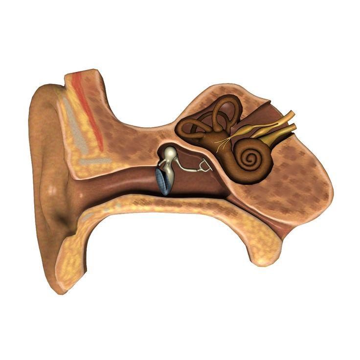 Conversando sobre avances para atender la pérdida de audición por otoesclerosis - http://plenilunia.com/capsula-plenilunia/conversando-sobre-avances-para-atender-la-perdida-de-audicion-por-otoesclerosis/32951/