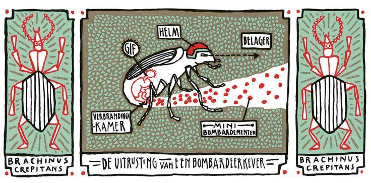 'Het raadsel van alles wat leeft' from J.P. Schutten illustrated by Floor Rieder