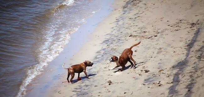 Jak obronić pupila przed atakiem obcego psa