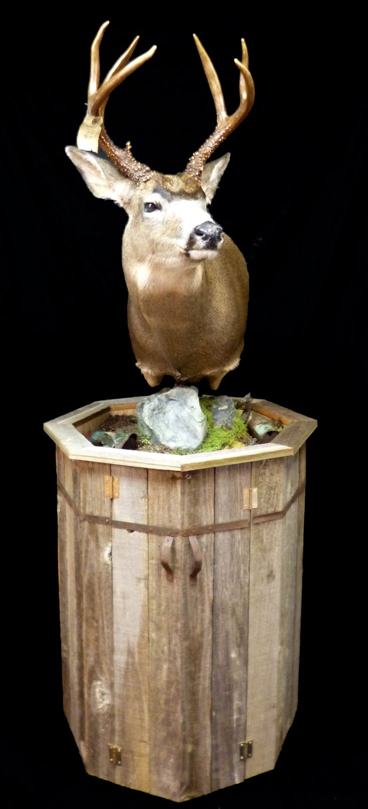 17 Best Images About Taxidermy Work And Reference On