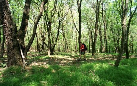 Saddlers Woods on Haddon Township New Jersey
