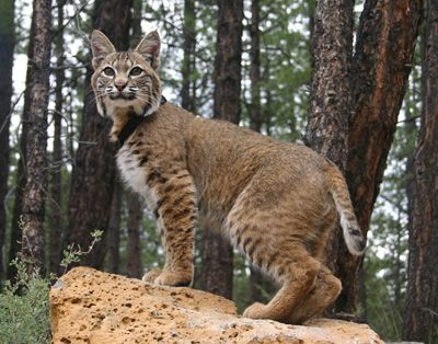 Fun facts on animals in the Smoky's  10 Cute Smoky Mountain Animals That Could Kill You (If They Felt Like it)