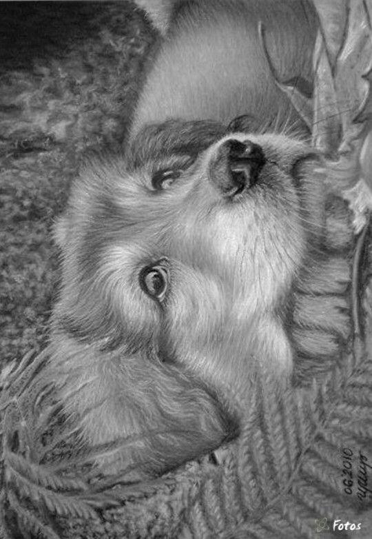 наживка картинки пейзажи животных карандашом сверкающие камушки