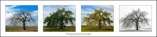 Horizontal seasons of the tree.  Photography by Nicole Griffin