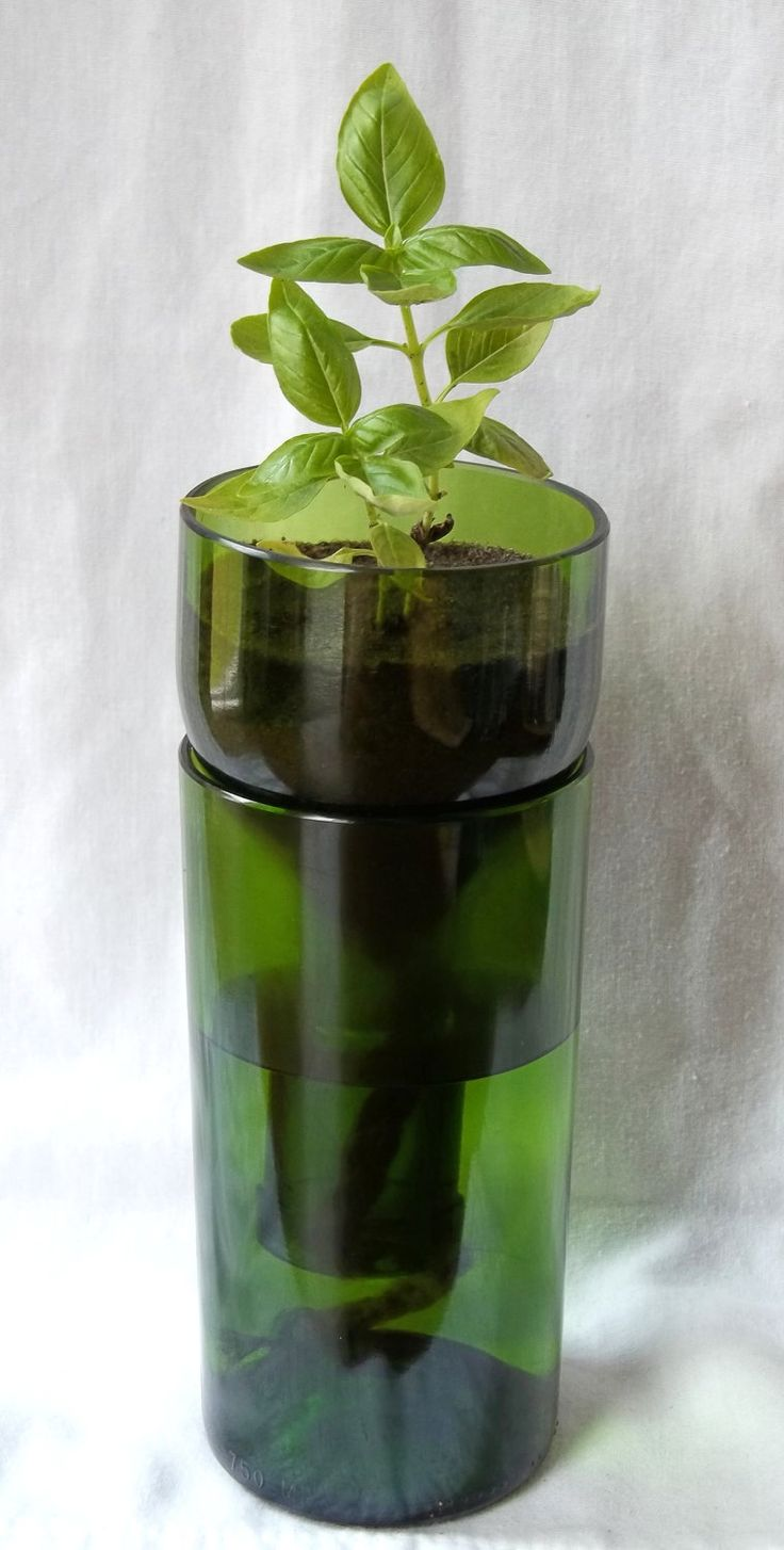 very crafty a wine bottle cut in half top turned upside down to make self watering plant pot