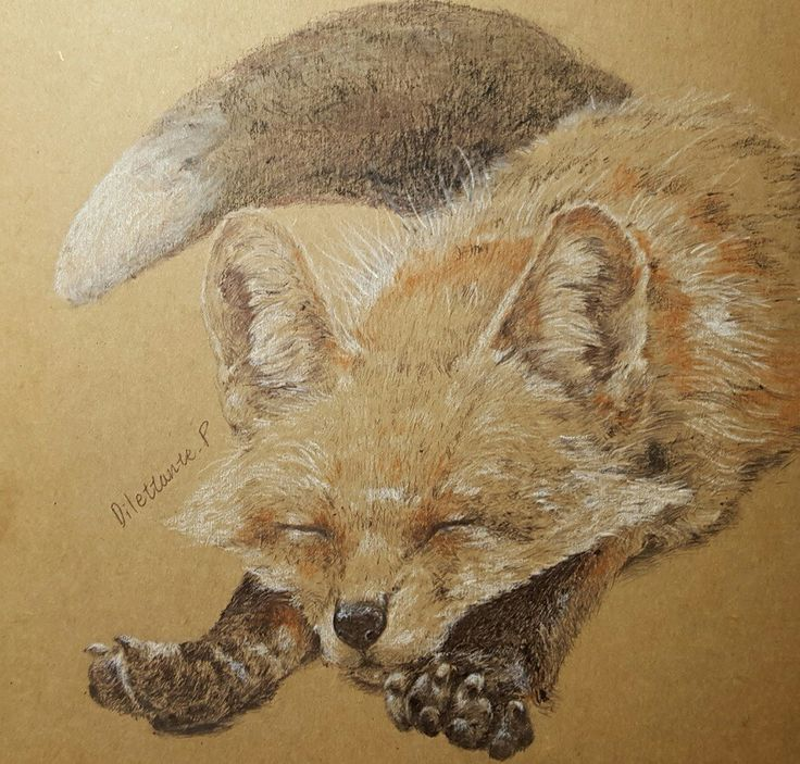 #draw #drawing #art #illustration #picture #draw #drawing #art #illustration #fox