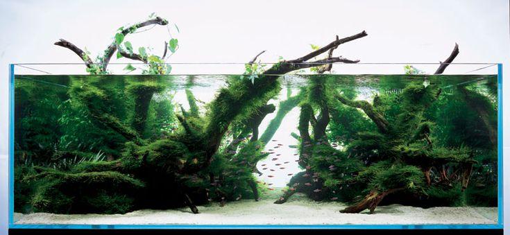 17 Best Ideas About Aquarium Lighting On Pinterest Led