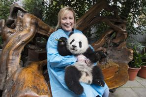 Dujiangyan Base, A New Panda Breeding Base in China