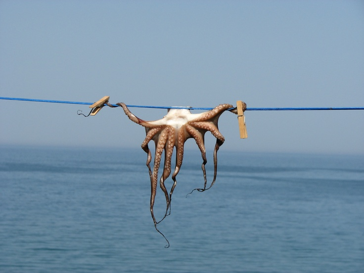Octopus ; plaka ; Crete ; Greece