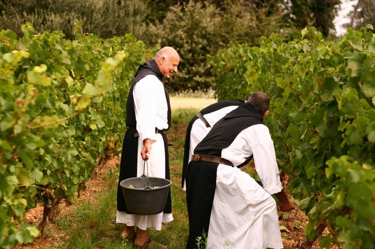 French monks of the Cistercian Abbey of Lerins, gathering grapes.click to enlarge/// Lérins Abbey , a Cistercian monastery (within the Catholic Church), on the island of Saint-Honorat, one of the Lérins Islands, on the French Riviera, with an active monastic community. There has been a Monastic community there since the 5th century. The construction of the current monastery buildings began around 1073. Today the monks cultivate vineyards and offer places for contemplative retreats.