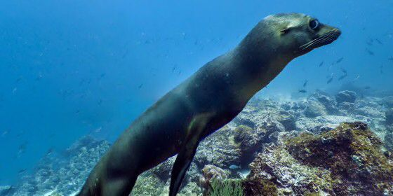 Check out Champion Island West, Galapagos on #StreetView