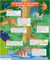 Les animaux les plus connus de la jungle africaine