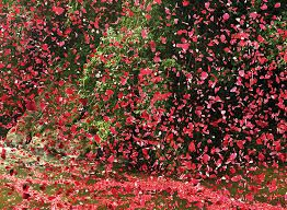 Image result for petals rain