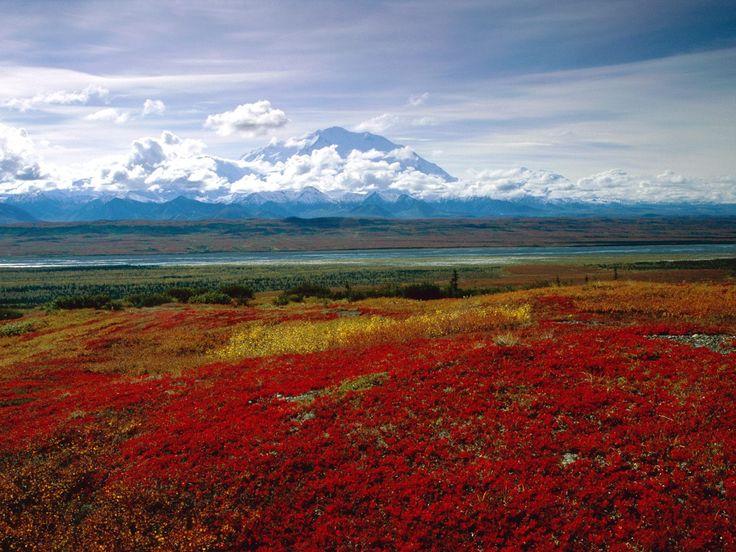 Margy's Musings: Beautiful Alaskan Photos: Favorite Places, Nature, Alaska, Brilliant Colors, Beautiful Places, Denali National, National Parks, Landscape, Photo