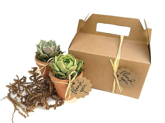 Two beautiful succulents wrapped in a Kraft gift box - great corporate gift or hostess gift!  - by SucculentsAndMore1 on Etsy